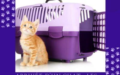 Arrivée d'un chat : Les accessoires de base