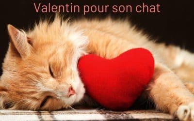 Idées de cadeaux de Saint Valentin pour son chat