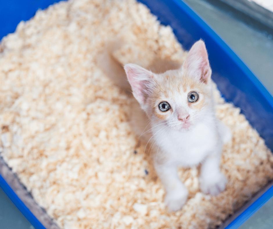 bac à litière idéal chat