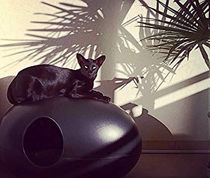 bac à litière idéal pour chat : poopoopeedoo