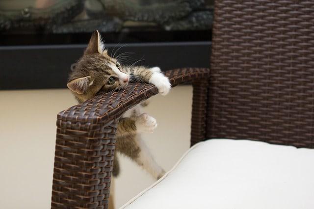 1eres explorations d'un chaton