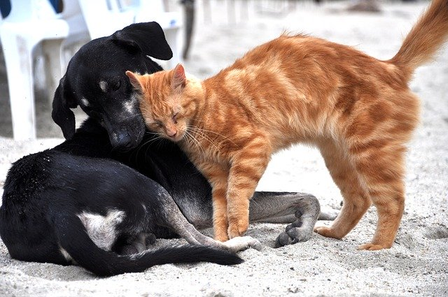 ACCUEILLIR UN CHATON (OU CHAT ADULTE) : un chat et un chien