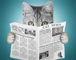 cat news