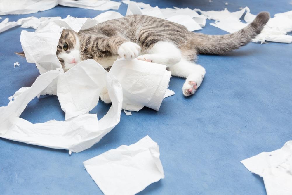 jeu pour le chat : liberer les tensions