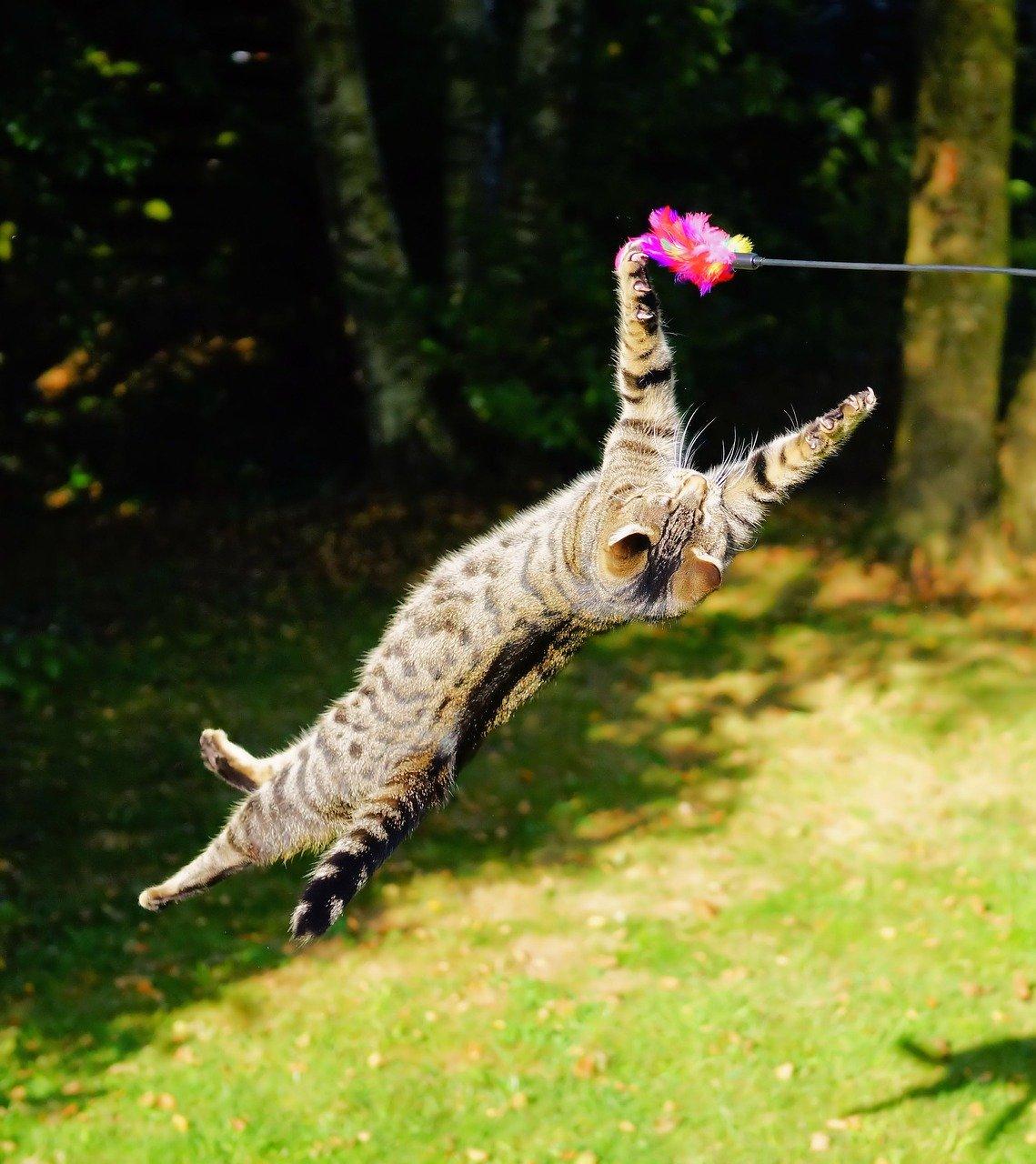 le jeu pour le chat : un exutoire