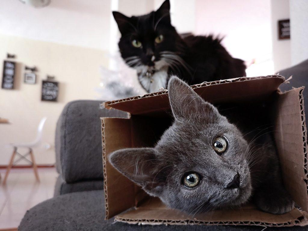 jeu pour le chat : la boite en carton