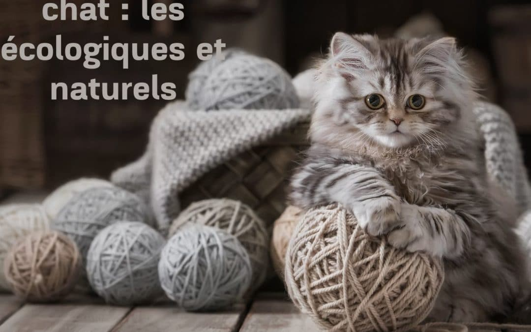Jouets pour chat :  les écologiques et naturels