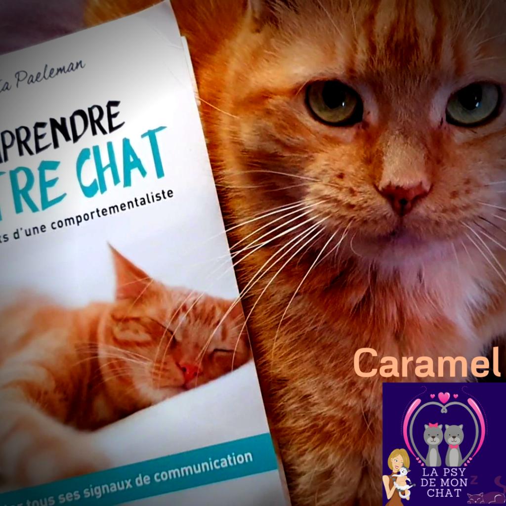 caramel - instagram - comprendre votre chat de sonia paeleman
