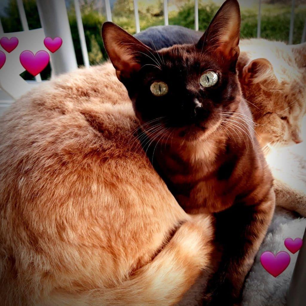 chats de valerie Lebon