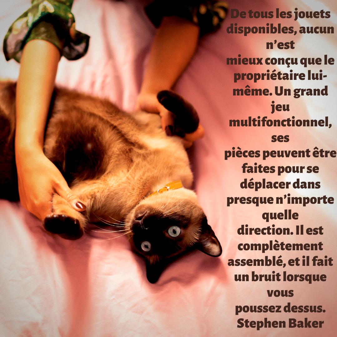 citation - instagram - jouets chat réalistes