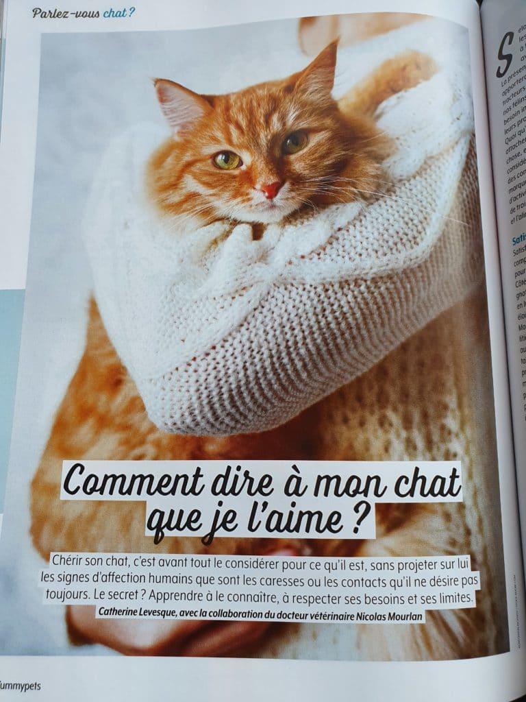 Magazine matou chat dossier central