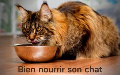 Bien Nourrir son Chat