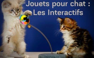 Jouets pour chat : Les Interactifs