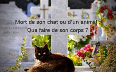 Mort de son chat ou d'un animal : Que faire de son corps ?