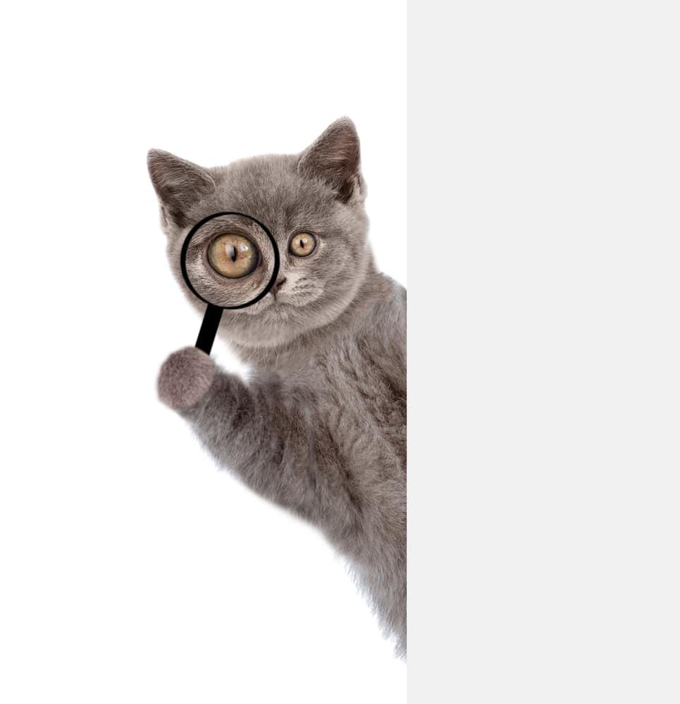 chat avec une loupe