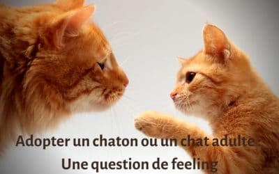 Adopter un chaton ou un chat adulte : une question de feeling.