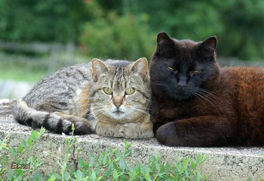 Noiraud et Minnie
