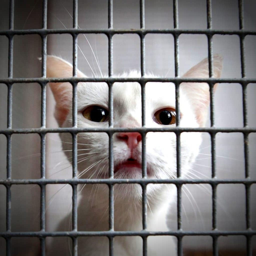 chat derriere des grilles