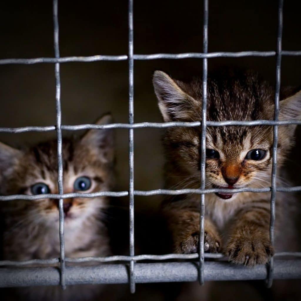 chatons en refuge