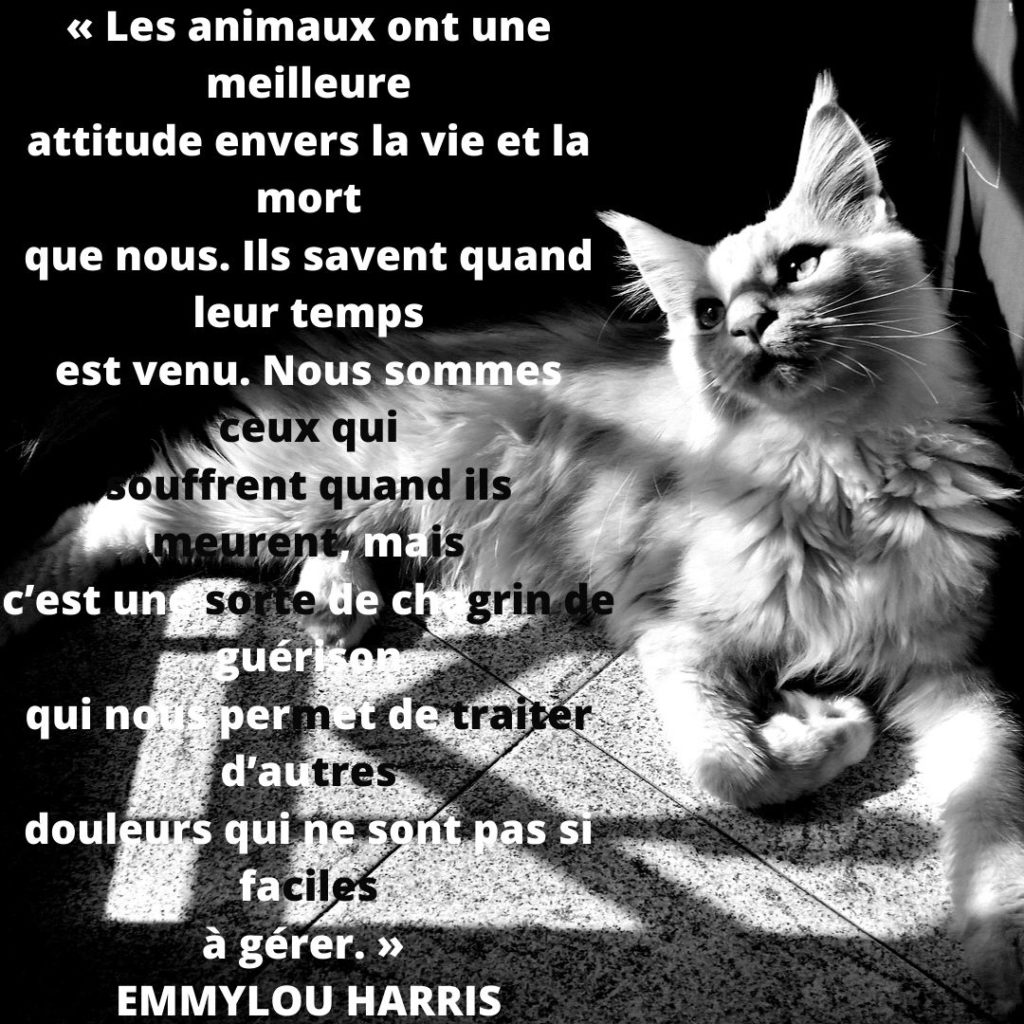 citation chat sur la mort -