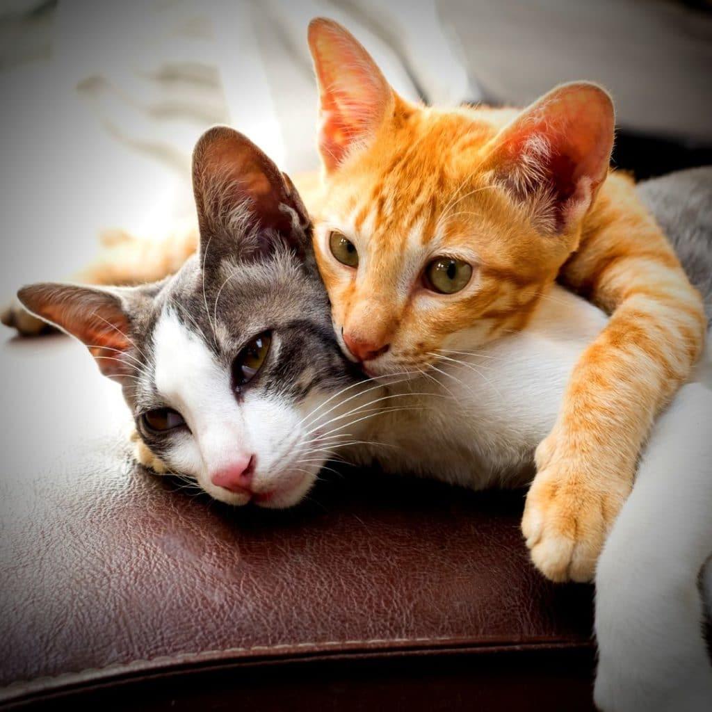 jeunes chats