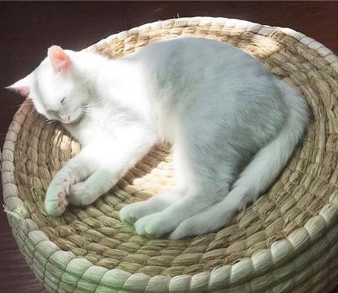 panier rond en osier chat