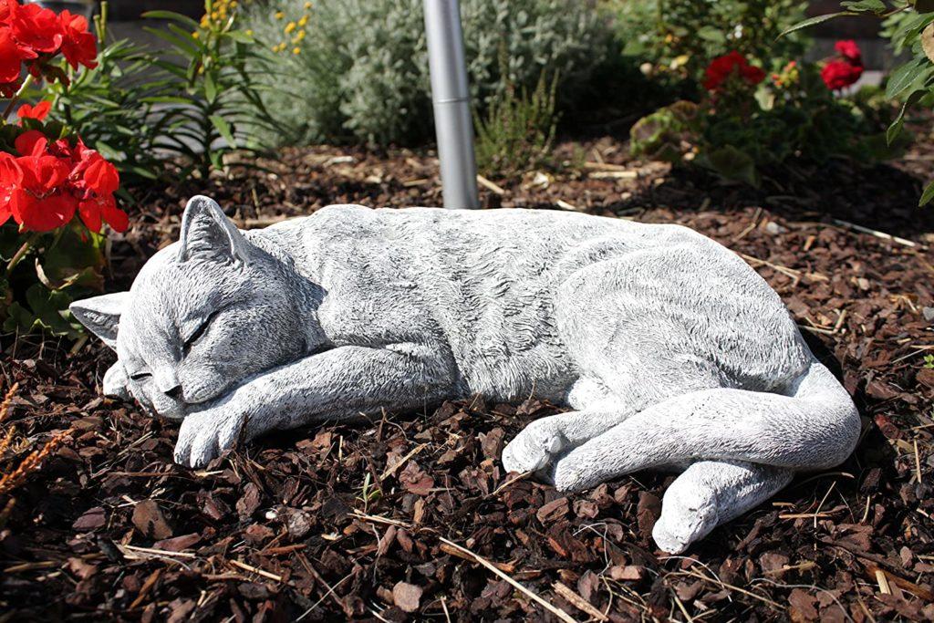 stelle chat endormi pierre