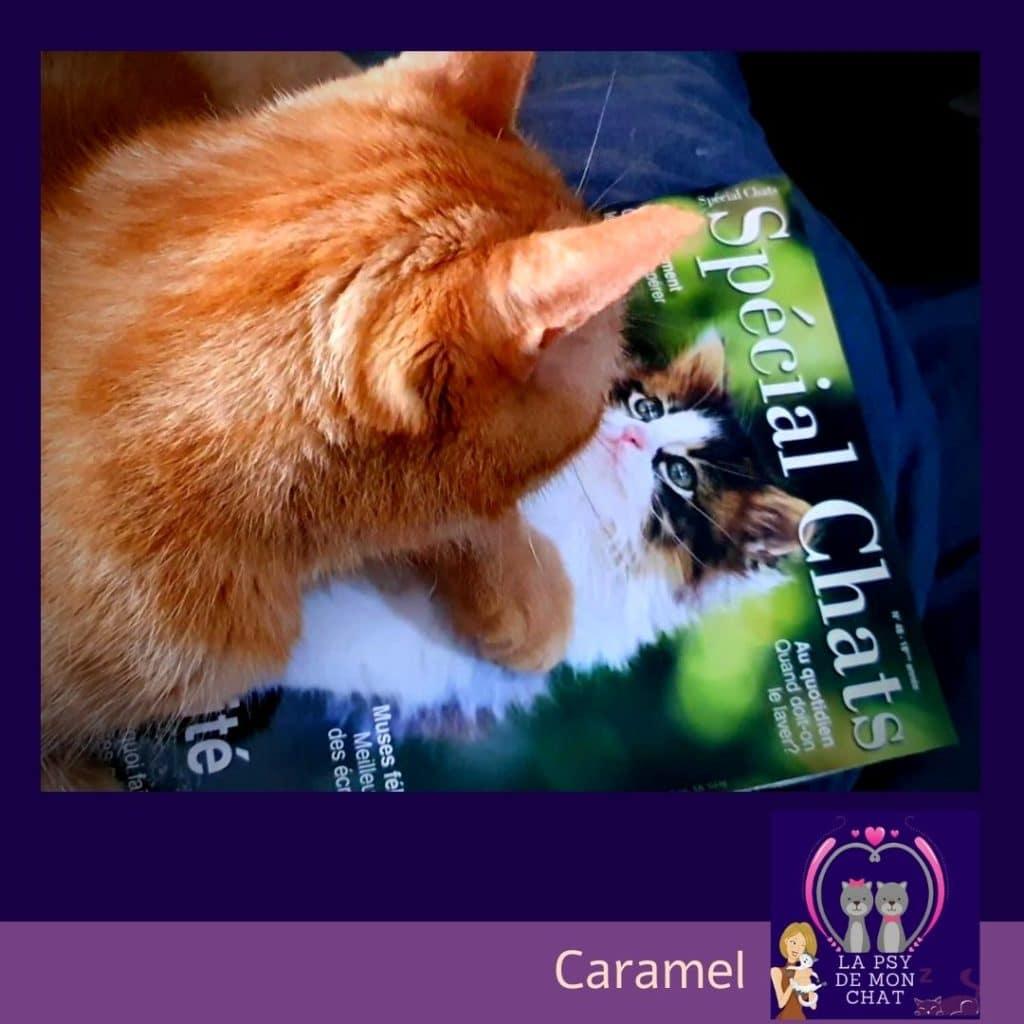 Caramel et le magazine spécial chats