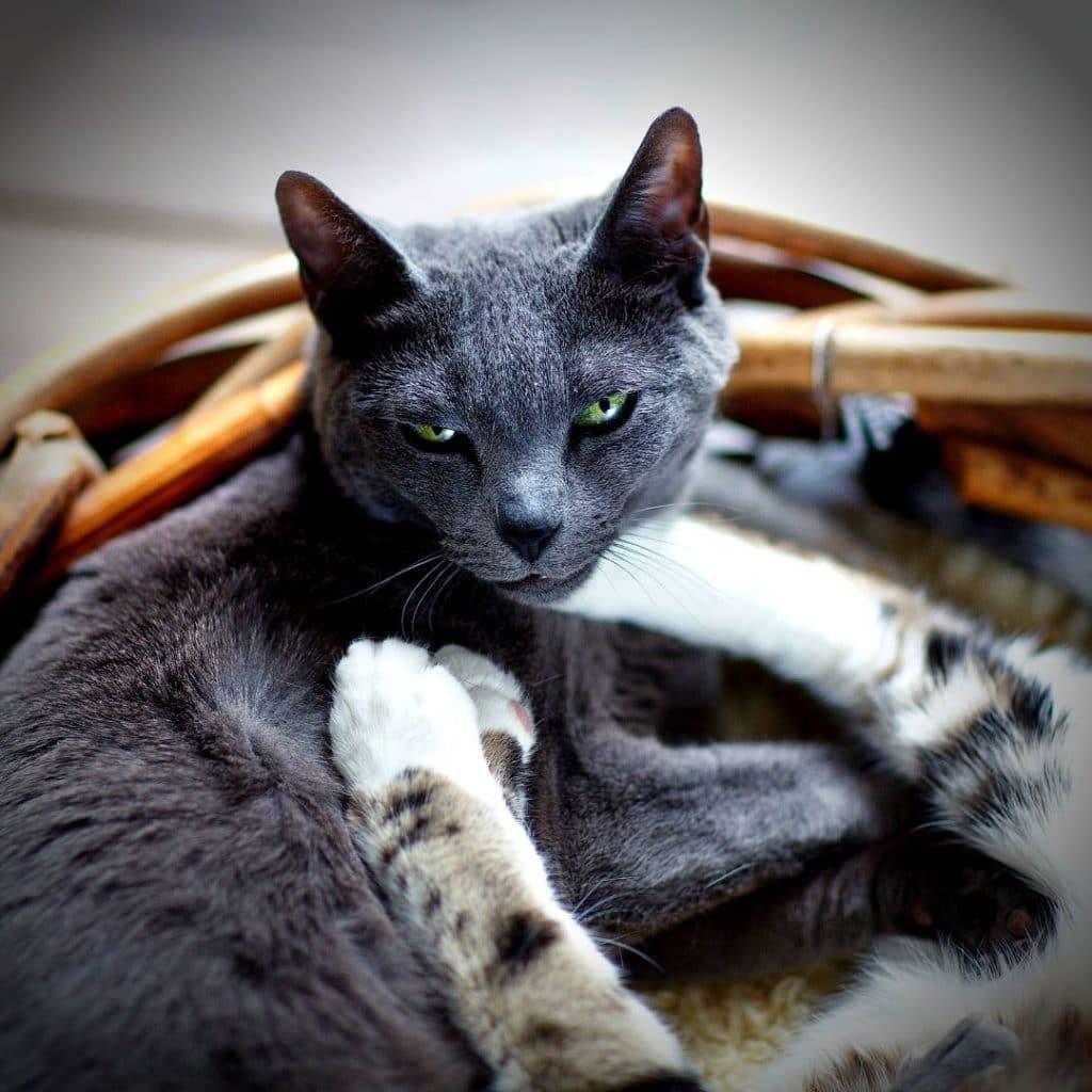 paniers pour chat naturels