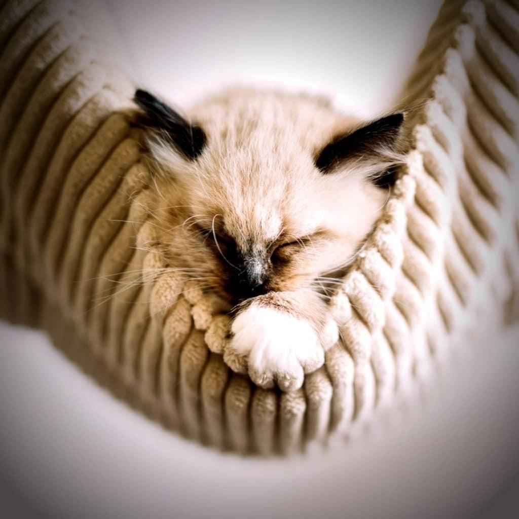 paniers suspendus et naturels pour chat
