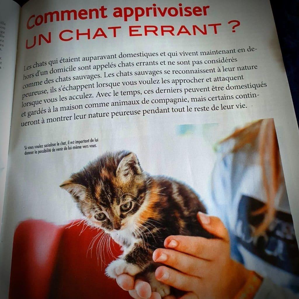 - spécial chats N°48 -