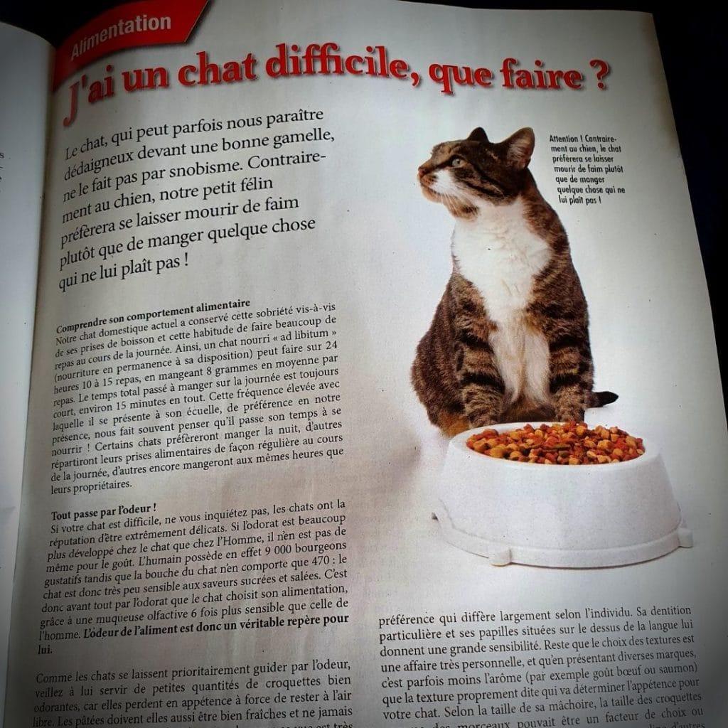 spécial chats - numéro 48