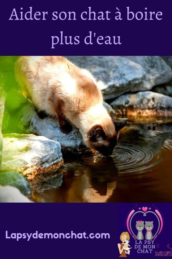 Aider son chat à boire plus d'eau - pinterest