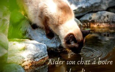 Aider son chat à boire plus d'eau