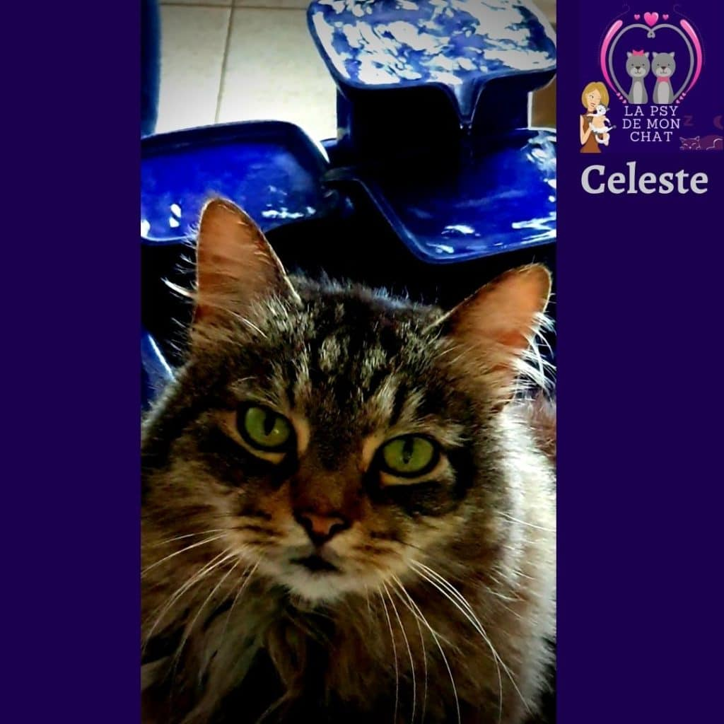 celeste et la fontaine à eau pour chat de Miaustore