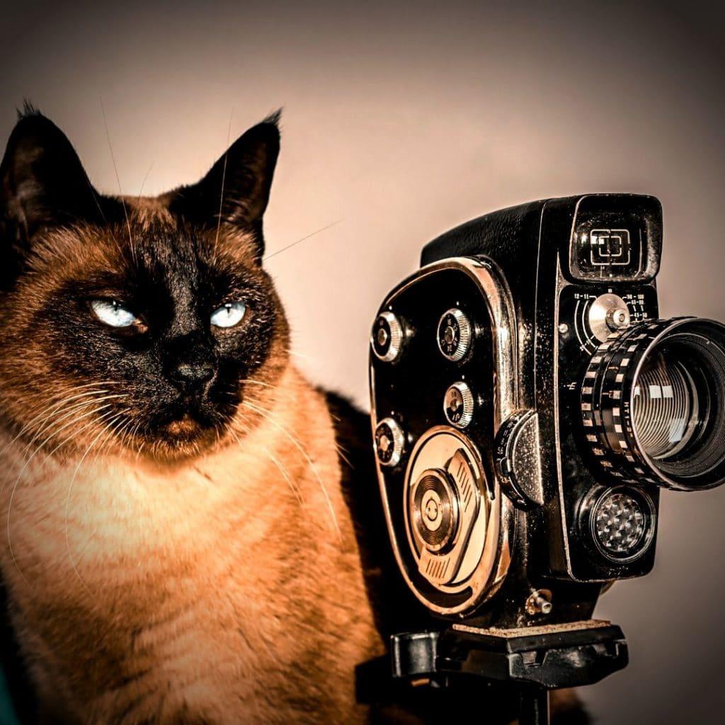 chat avec sa caméra