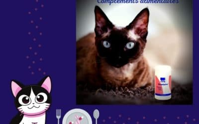 La Lysine pour chat de MP Labo