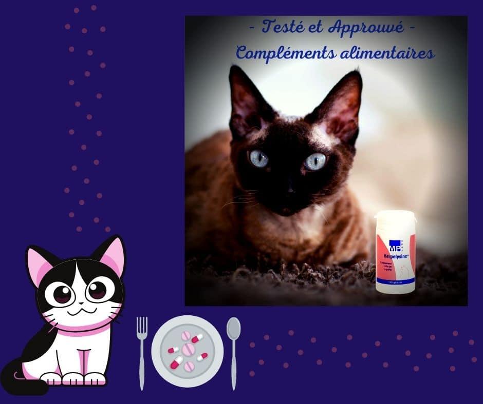 lysine pour chat