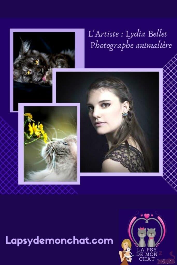 Artiste Lydia Bellet – Photographe animalière - Pinterest