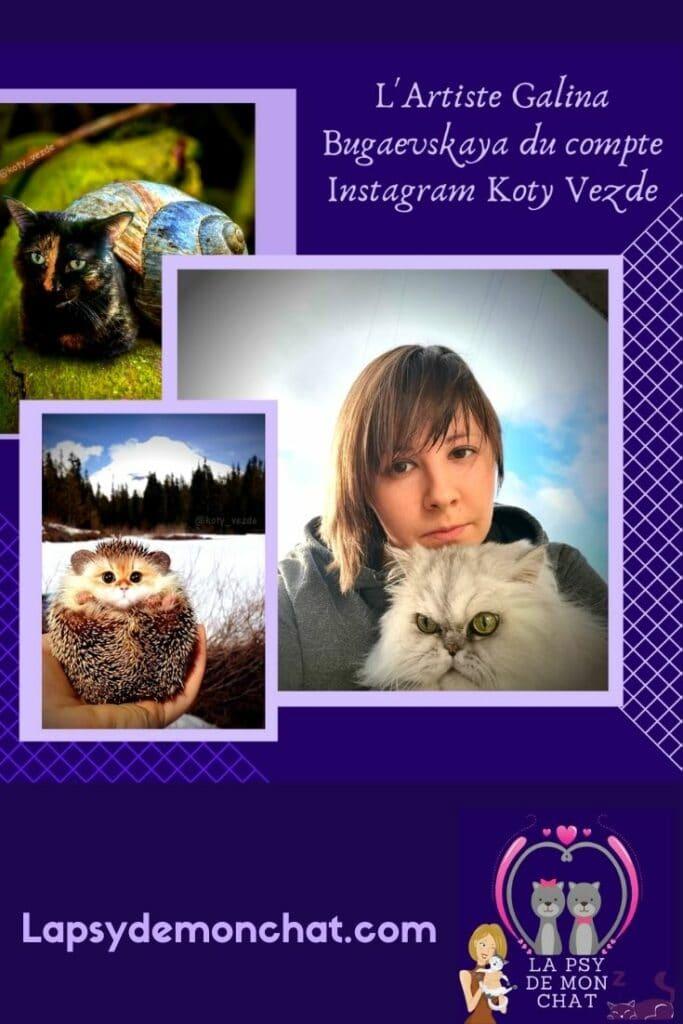 Galina Bugaevskaya du compte Instagram Koty Vezde - pinterest