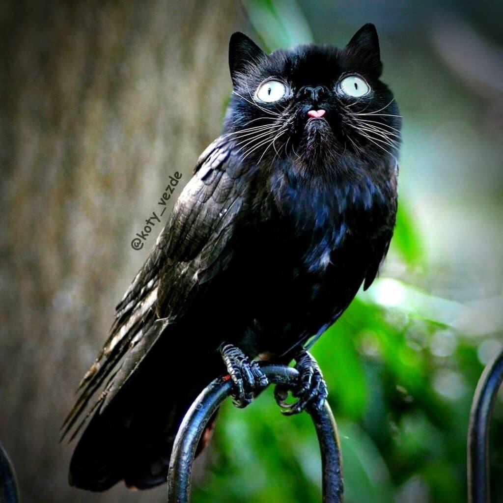 Koty Vezde - chat oiseau
