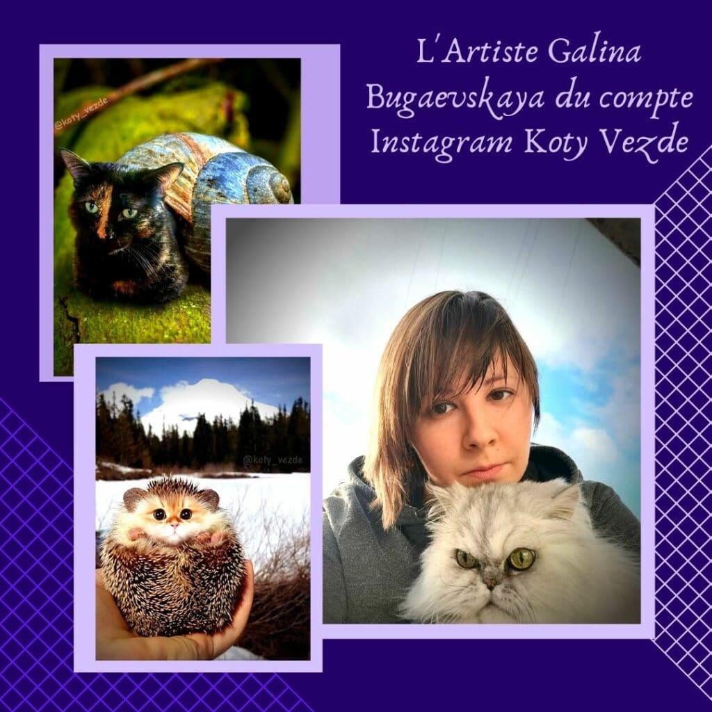 L'Artiste Galina Bugaevskaya du compte Instagram Koty Vezde