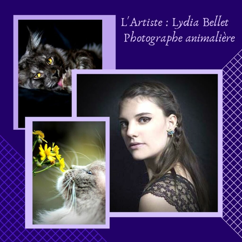 L'Artiste Lydia Bellet – Photographe animalière