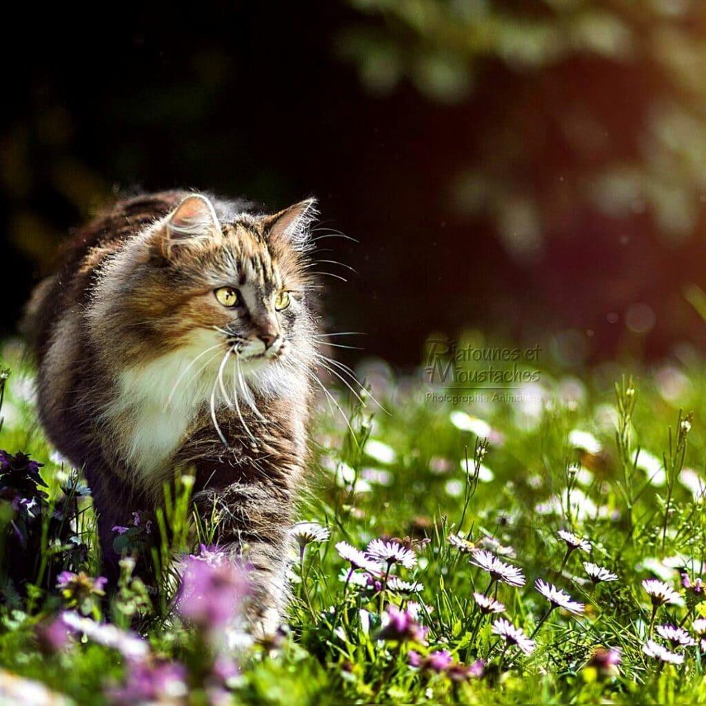 Michka - lydia bellet - photograhe animaliere --
