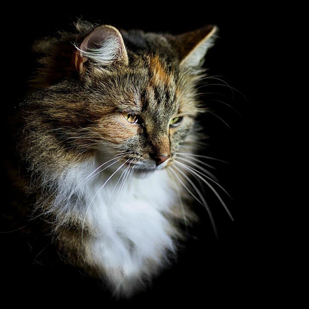 Michka - lydia bellet - photograhe animaliere ---