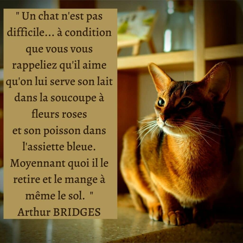 citation chat nourriture