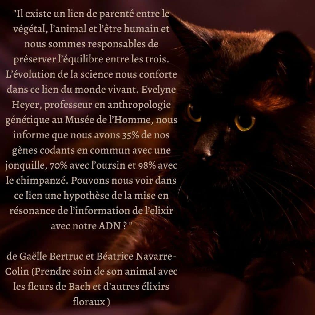 citation de Gaëlle Bertruc et Béatrice Navarre-Colin -