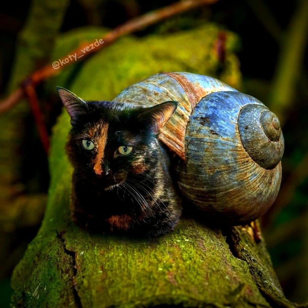 Koty Vezde - chat escargot