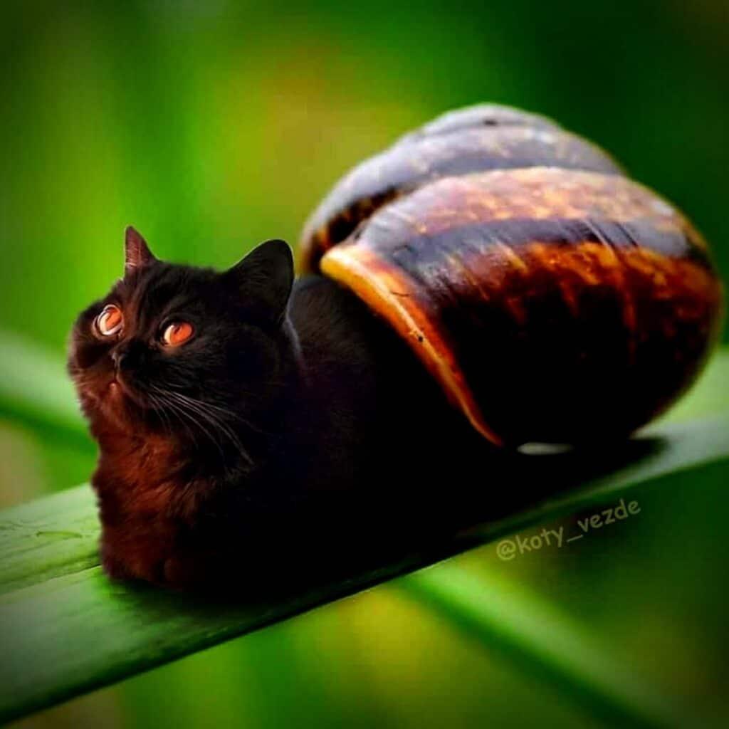escargot - Koty Vezde