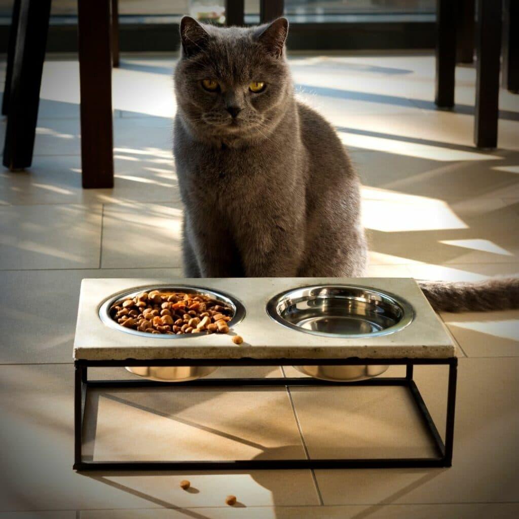 gamelles pour chat surélevées avec support